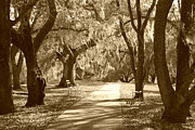 Pathway Digital Art - A Place for Contemplation in sepia by Suzanne Gaff