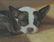 Terriers Pastels Framed Prints - A Place in the Sun Framed Print by Pamela Humbargar
