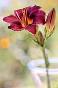 Daylily Posters - A Plum Perfect Kinda Day Poster by Heidi Smith