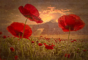 Rural Living Posters - A Poppy Kind of Morning Poster by Debra and Dave Vanderlaan