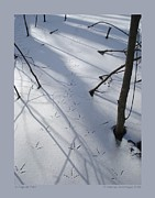 Bird Tracks Photos - A Popular Path by Patricia Overmoyer
