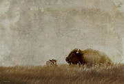 American Bison Prints - A Prairie Life Print by Ron Jones