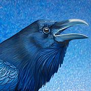 Raven Framed Prints - A Ravens Prayer Framed Print by Brian  Commerford