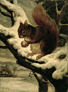 Nuts Paintings - A Red Squirrel Eating a Nut by Basil Bradley
