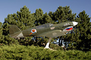 Model Aircraft Prints - A Replica Of The Curtiss P-40e Warhawk Print by Stocktrek Images
