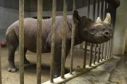 Cage Art - A Rhino At The Sedgwick County Zoo by Joel Sartore