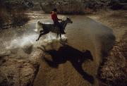 Rocky Mountain Horse Prints - A Rider Retraces The Original Pony Print by Phil Schermeister