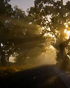 Mist Photos - A Road less Traveled by Mike  Dawson