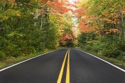 Double Yellow Lines Posters - A Road Lined With Trees In Autumn Poster by Susan Dykstra