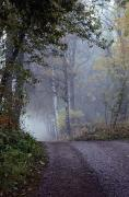 Dirt Roads Metal Prints - A Road Through A Misty Wood Metal Print by Mattias Klum