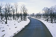Winter Road Scenes Prints - A Road Winds Through A Fire-damaged Print by Rich Reid