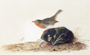 Wild Life Framed Prints - A Robin Perched on a Mossy Stone Framed Print by John James Audubon