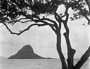 Islands Prints - A Rock Formation In The Pacific Ocean, Oahu, Hawaii Print by Brian Caissie
