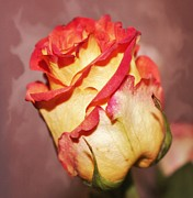 City Photography Digital Art - A Rose alone by Cathie Tyler