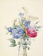 Blue Flower Prints - A Rose Anemone Mignonette and Daisies Print by Nathalie d Esmenard