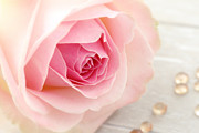 HJBH Photography - A rose