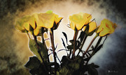Roses Digital Art - A Rose is A Rose is A Rose by Bill Cannon