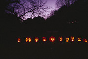 Night Scenes Framed Prints - A Row Of Jack-o-lanterns Illuminated Framed Print by Bill Curtsinger