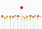 Standing Out From The Crowd Posters - A Row Of Various Colored Gerbera Daisies And One Towering Above Them Poster by Jutta Kuss
