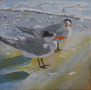 Tern Originals - A Royal Tern by Libby  Cagle