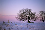 Winter Scenes Rural Scenes Framed Prints - A Rural Cemetery, Snow, And Bare Trees Framed Print by Joel Sartore