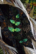 Botanical Tapestries - Textiles Metal Prints - A Safe Haven Metal Print by Linda Beach