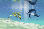 Fish In Ocean Framed Prints - A Sailfish Hunts Prey On A Sandy Reef Framed Print by Corey Ford