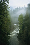 North Vancouver Framed Prints - A Salmon Spawning River Runs Framed Print by Taylor S. Kennedy