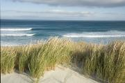 Aotearoa Photo Metal Prints - A Scenic Hillside Of The Beach Metal Print by Bill Hatcher