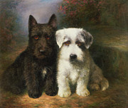 Black-and-white Metal Prints - A Scottish and a Sealyham Terrier Metal Print by Lilian Cheviot