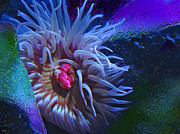Living Creatures Photo - A Sea Anemone by Natalya Shvetsky