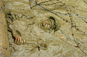 Submerge Photos - A Seabee Emerges From Muddy Water by Stocktrek Images