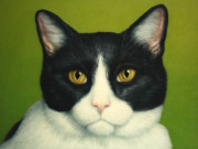 Green And White Framed Prints - A Serious Cat Framed Print by James W Johnson