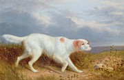 Dog Walking Painting Posters - A Setter on the Moor Poster by Philip Reinagle