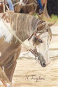 Horse Drawings - A Shade Apart by Nichole Taylor