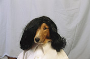 Wigs Framed Prints - A Sheltie Is Posed For A Humorous Framed Print by Joel Sartore