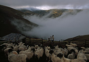 Herders Prints - A Shepherd Tends His Flock Print by Randy Olson
