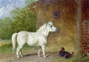 Spaniel Paintings - A Shetland pony and a King Charles spaniel by Martin Theodore Ward