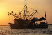 Gulf Of Mexico Scenes Framed Prints - A Shrimp Boat Silhouetted Against An Framed Print by Medford Taylor