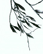 White Art Mixed Media Prints - A Single Branch Print by Ann Powell