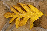 Carolyn Marchetti - A Single Yellow Leaf
