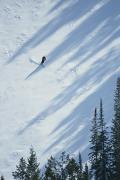 Snow Scenes Prints - A Skier Glides Across A Pine-shadowed Print by James P. Blair
