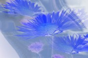 Abstract Floral Photos - A Slanting Blue Wind  by Jeff  Swan