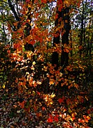 Indiana Autumn Metal Prints - A Slash of Sunlight Metal Print by Julie Dant