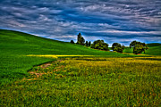 Canola Field Prints - A Sliver of Canola Print by David Patterson