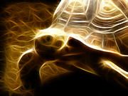Tortoise Digital Art - A Slow Stroll by Tilly Williams