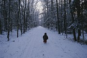 Winter Roads Prints - A Small Child Walks Down A Snowy Road Print by Roy Gumpel