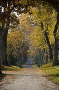 Autumn Country Road Posters - A Small Country Road Lined With Tall Poster by Hannele Lahti