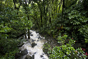 El Yunque National Rainforest Posters - A Small River Flows Through A Dense Poster by Hannele Lahti
