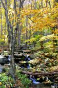 Mass Pike Prints - A Smokey Mountain Stream  Print by Brittany H
